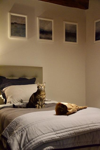 Bleu gris blanc chat hannah elizabeth interior design