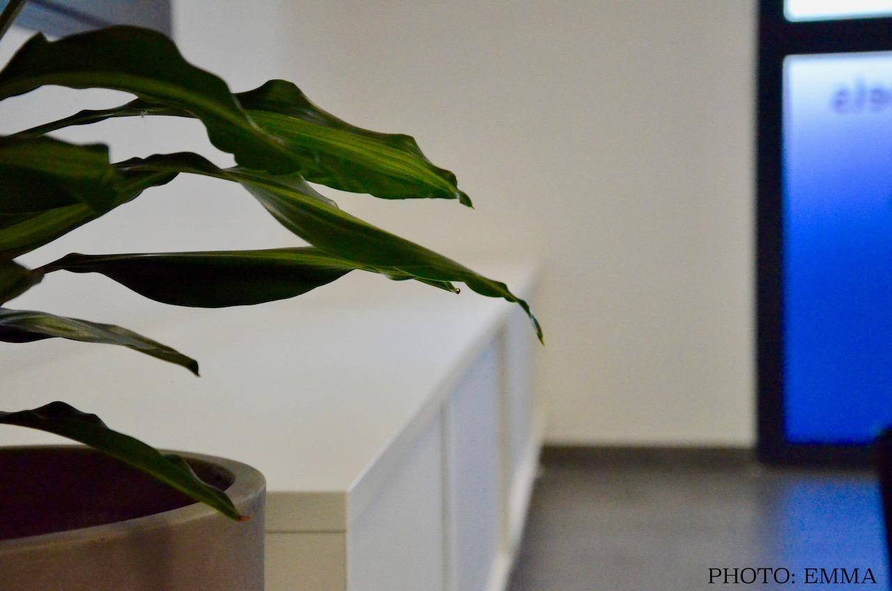 Gan assurance chatillon plantes verte meuble blanc hannah elizabeth interior design