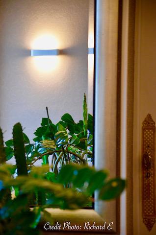 Miroir plante verte applique hannah elizabeth interior design