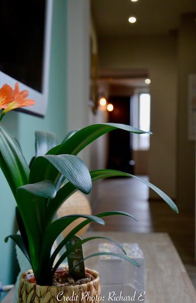Nature plante mur vert deau hannah elizabeth interior design