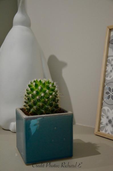 Penguin cactus deco hannah elizabeth interior design