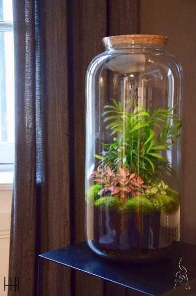 Plante vert dans salon hannah elizabeth interior design